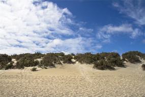 澳洲袋鼠岛上的沙滩灌木丛