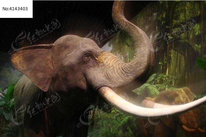 博物馆大象图片,高清大图