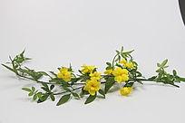 春天开漂亮黄花的藤蔓