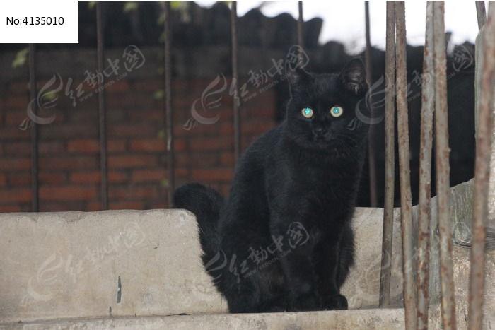 黑色可爱猫咪图片,高清大图