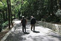 林中散步的老人