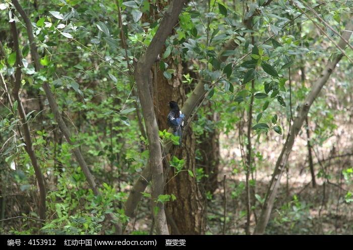 林中小鸟图片,高清大图_空中动物素材