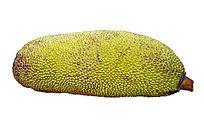 热带水果菠萝蜜