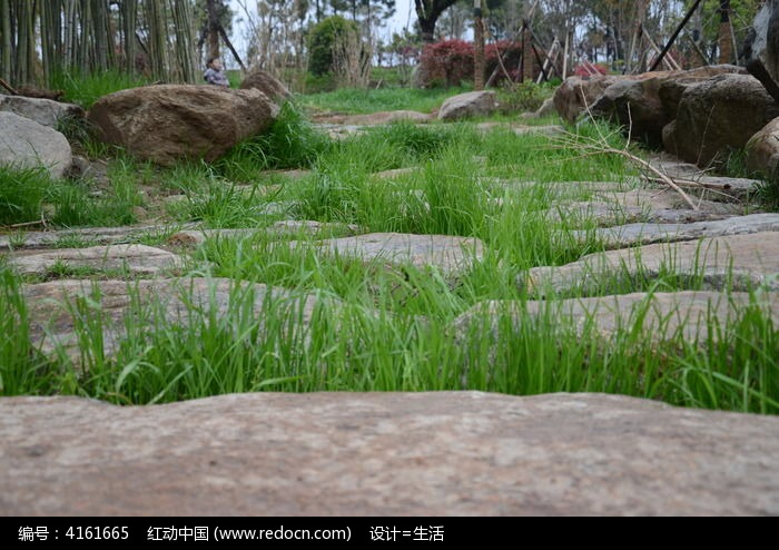 石头缝隙里的草