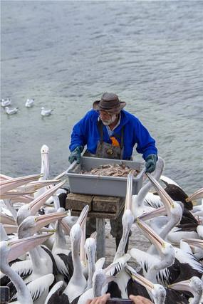 老人与海读书阅读手抄报