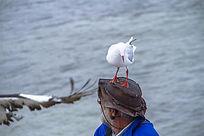 站在饲养员头顶上的一只小鹈鹕