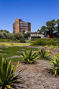 阿德莱德植物园景观