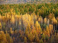 初秋的森林
