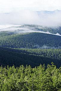 大兴安岭原生态森林