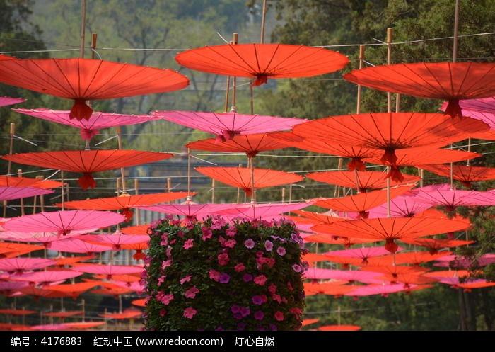原创摄影图 动物植物 花卉花草 红伞下的花朵  请您分享: 素材描述:红