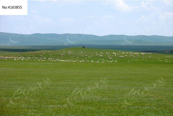 牧场羊群图片, 高清 大图