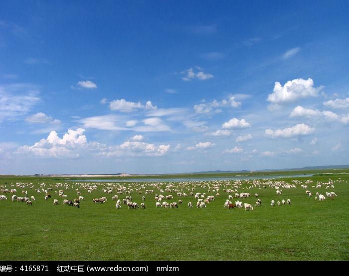 牧场珍珠般的羊群图片