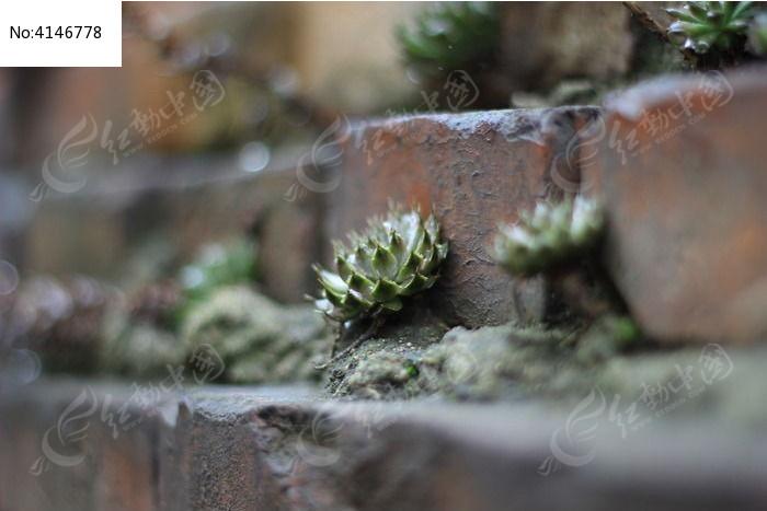 原创摄影图 动物植物 花卉花草 墙头的小草  请您分享: 红动网提供