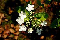 盛开的小花朵