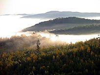 原始森林晨雾