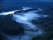 原始森林蓝雾之夜