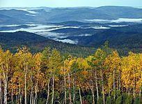 原始森林秋季晨雾