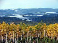 原始森林远山晨雾