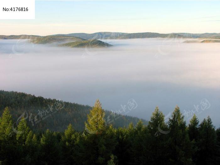 原始森林云海图片