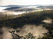 原始森林云雾升腾