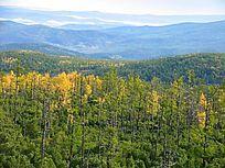 原始森林之秋