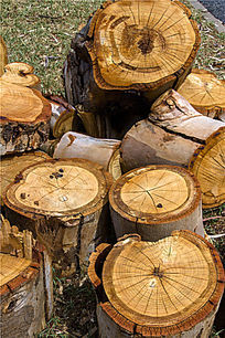 横截面的圆型木墩