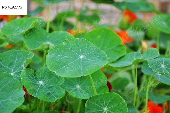 原创摄影图 动物植物 花卉花草 绿色的叶子