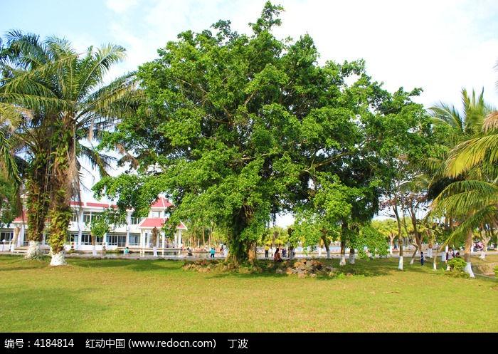 南丽湖景区内的大榕树图片,高清大图_树木枝叶素材
