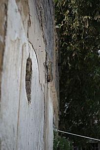 望乡台破旧的墙壁