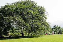 西双版纳植物园景观