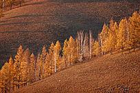 阿尔山秋季山林风景