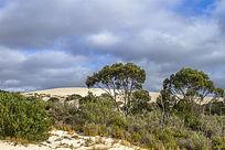 澳洲袋鼠岛农场的小沙漠