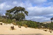 澳洲袋鼠岛小沙漠