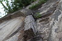 饱经风雨的石块
