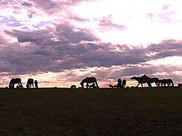 大草原暮色下的马群剪影