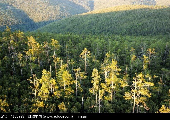 保护 生态 山林 松林 林海 落叶松  地理 地貌 自然 风景 风景区 保护