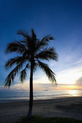 下载收藏 海滩上椰树的广角图片 下载收藏 海边椰树上的两只脚 下载