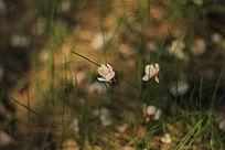 掉落于草丛的落花