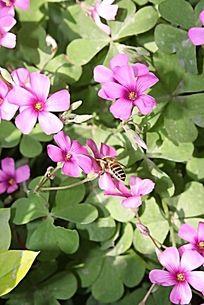 花丛间的蜜蜂