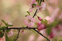 几朵桃花开了