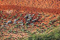农民在菜地种植蔬菜