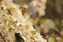 辛勤的小蜜蜂