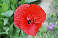 妖艳的小红花