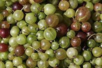 野果水葡萄