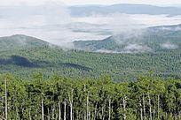 原始森林的清晨