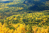 原始森林秋色