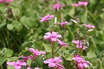直立的小花朵