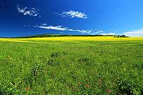 呼伦贝尔红花草甸