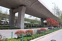 立交桥和红枫树