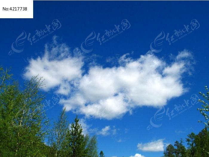 树林蓝天白云图片图片